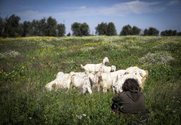 campagna, country, lifestyle, primavera, ricetta, homemade, pecore, pastore, basilicata, foodblogger