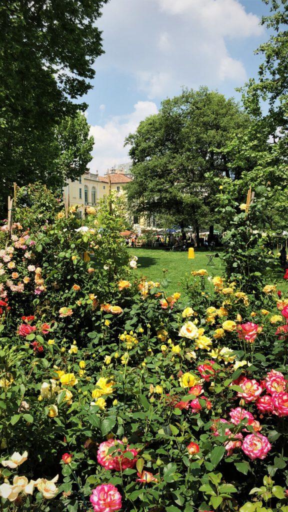 parco, milano, giardino rose, orticola