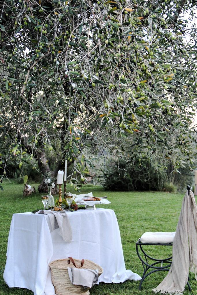 accade in tavola, tavolo, torta giardino, ulivo