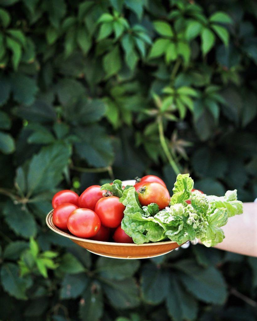 parmigiana_zucchine_ingredienti